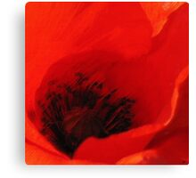Breeze - Dan ART Red Poppy Flower Pastel Sketch Canvas Print