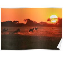 Springbok - African Wildlife Background - Magnificent Sun Poster