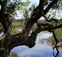 Old Tree Reaching Over To Taste The Water by DAngelo982