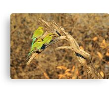 Bee-eater - African Wild Birds - Colorful Friends Canvas Print