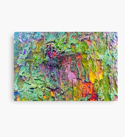 All the Colours of Lichen Canvas Print