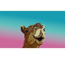 Smiling Camel Photographic Print