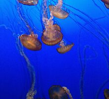 sea of jellyfish by micavd