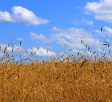 Wheat Field in Country with Open Blue Sky and Clouds Sticker