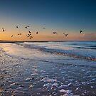 Seagulls at Dusk by Geoff Carpenter