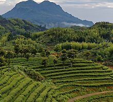 The Tea Farm and the Mountain by Alex Fricke