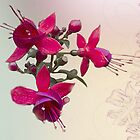 Fuchsia by Irene  Burdell