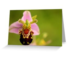 Flora - Smiling Flower Greeting Card