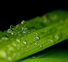 Raindrops keep falling by ncp-photography