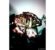 Stained Petals Photographic Print