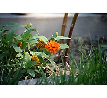 First Summer's Green Thumb Photographic Print