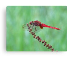 Reticulated Red at Rest Canvas Print
