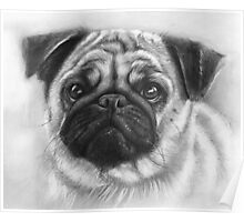 Cute Pug Dog Drawing Poster