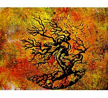 Old and Ancient Tree - Autumn Shades by Heather Holland Photographic Print