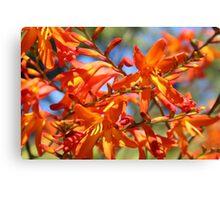 Orange Yellow Flowers Canvas Print