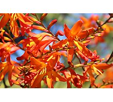 Orange Yellow Flowers Photographic Print