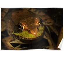 Green Frog #1 Poster