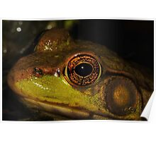 Green Frog #2  Poster
