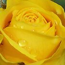 Yellow Rose by Lynn Bolt