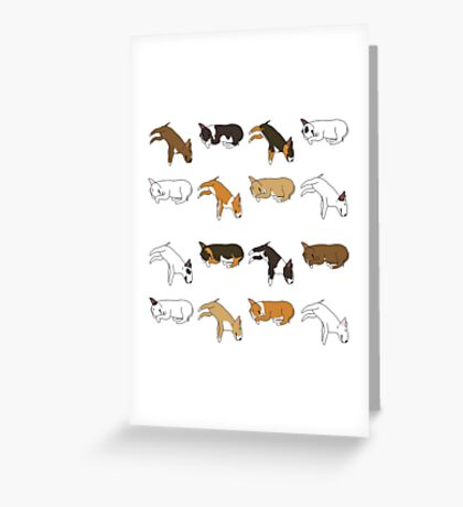 Lazy Bull Terrier - White Greeting Card
