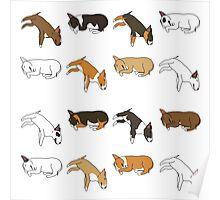 Lazy Bull Terrier - White Poster