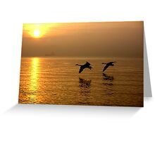 Sunrise Swans Greeting Card