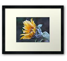 Frosty Sunflower Framed Print