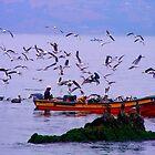 Caleta Higuerilla. Concón. Viña del Mar - Chile. by cieloverde