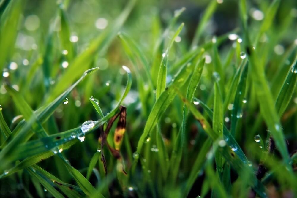 Dew Drop Grass by Vicki Field