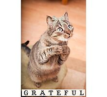 Cute cat with bow,grateful,typography,funny,happy, Photographic Print