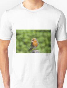 Robin clasps larva in its beak. T-Shirt