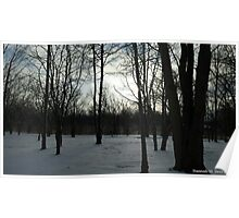 Bare Trees, Bright Sky Poster