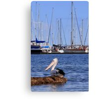 Brighton Marina pelican - Victoria - Australia Canvas Print