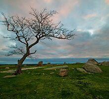 Dog Rocks Sunset by Danielle  Miner