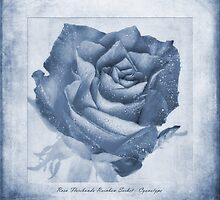 Rosa Floribunda Rainbow Sorbet Cyanotype by John Edwards