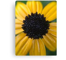 Wet, Yellow Flower Canvas Print