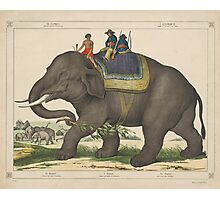 Vintage Painting of Men Riding an Elephant Photographic Print