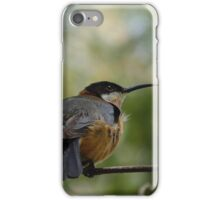 Eastern Spinebill iPhone Case/Skin