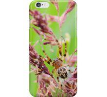 cross spider iPhone Case/Skin