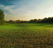 Farm Beauty by ElleEmDee