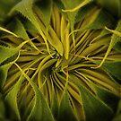 Sunflower II: Pucker Up! by Victoria Jostes