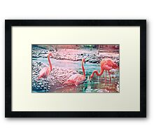 Exotic flamingos Framed Print