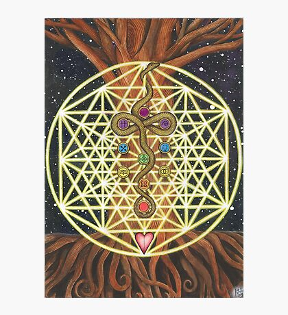 Universal Tree of Life Photographic Print