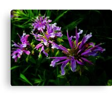 flowers of camelot Canvas Print