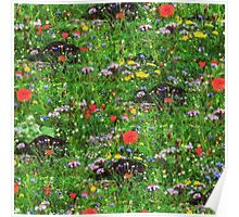 Wildflower Meadow Poster