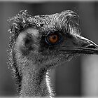 Mr Emu by Ladymoose