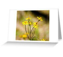 Golden Ragwort Greeting Card