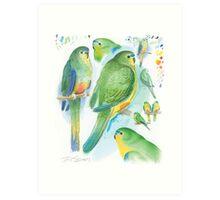 Orange-bellied Parrot Art Print