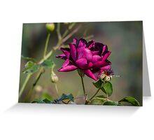 I dream of a rose..... Greeting Card