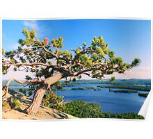 Windswept Pine Tree over Squam Lake, Holderness NH Poster